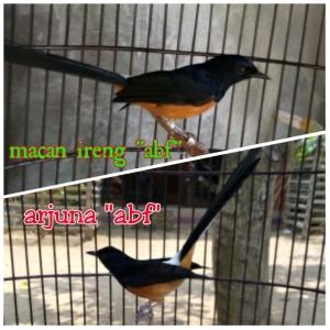 PhotoGrid_1447386211624