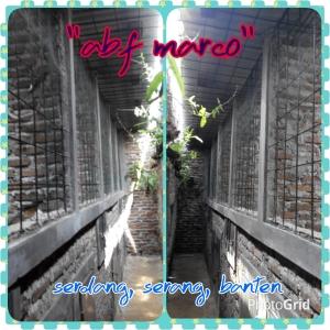 PhotoGrid_1448720957217